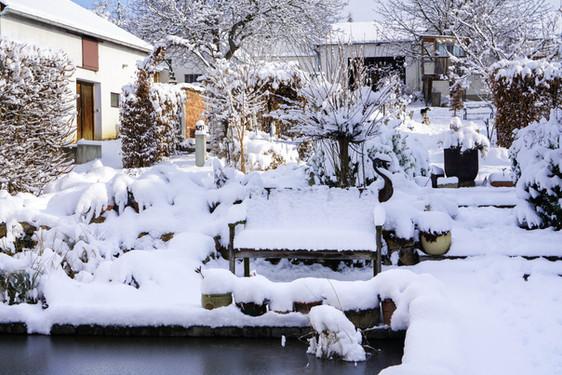 Neuschnee im Garten