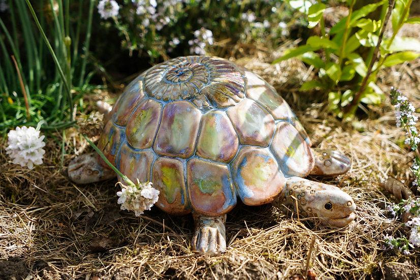 Schildkröte 'Sina'