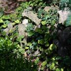 Efeu und Co im Garten