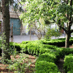 Formschnitt am Buchsbaum