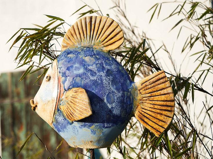 Flach-Fisch mit runder Flosse