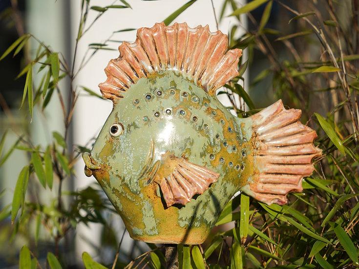 kleiner Flach-Fisch 'Olive'
