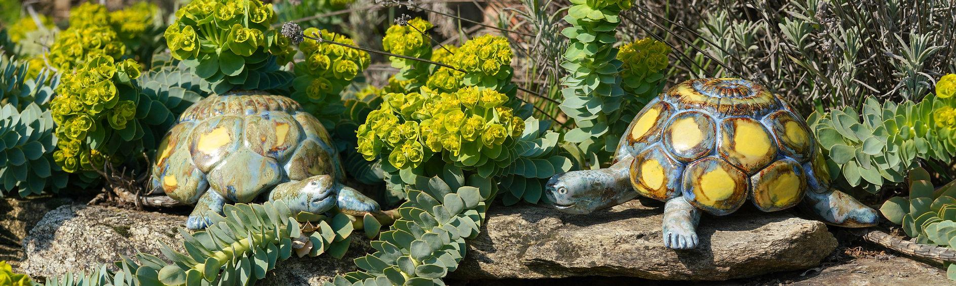 Schildkröte-4.jpg