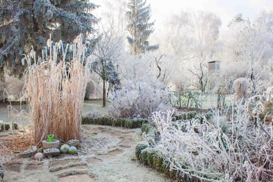 Vorgarten mit Raureif