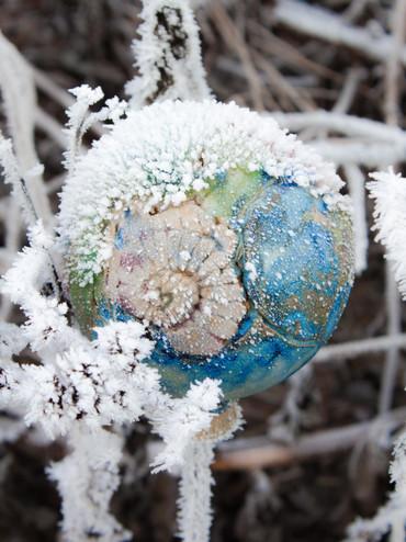 Ammoniten Rosenkugel mit Raureif