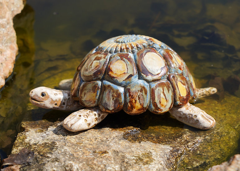 Schildkröte 'Toni'