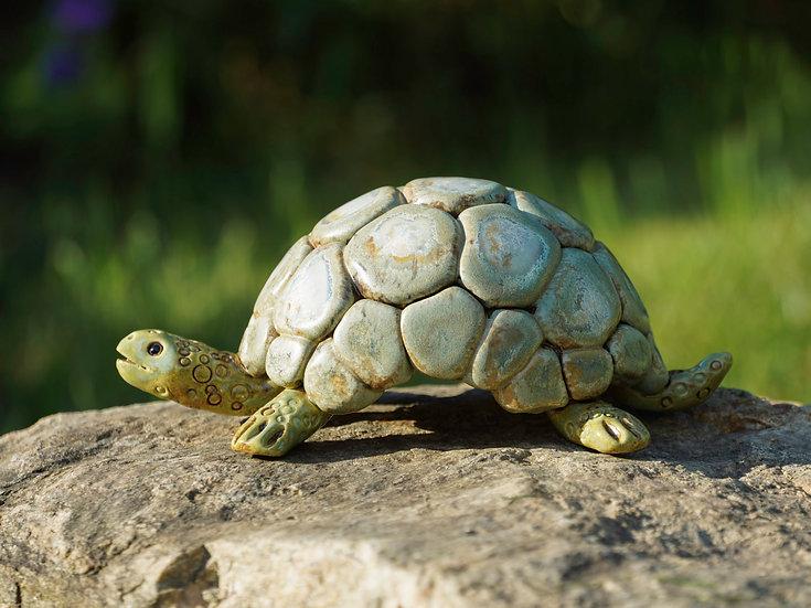 Schildkröte 'Rudi'