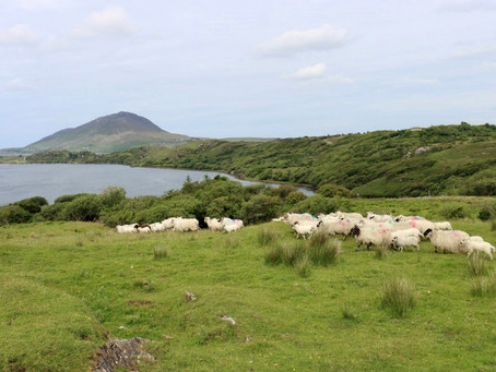 LIFE IP Wild Atlantic Nature launch new agri-environment pilot scheme in Co. Mayo