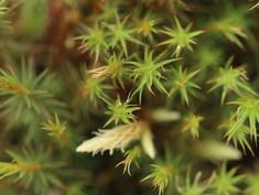 Moss_green.jpeg