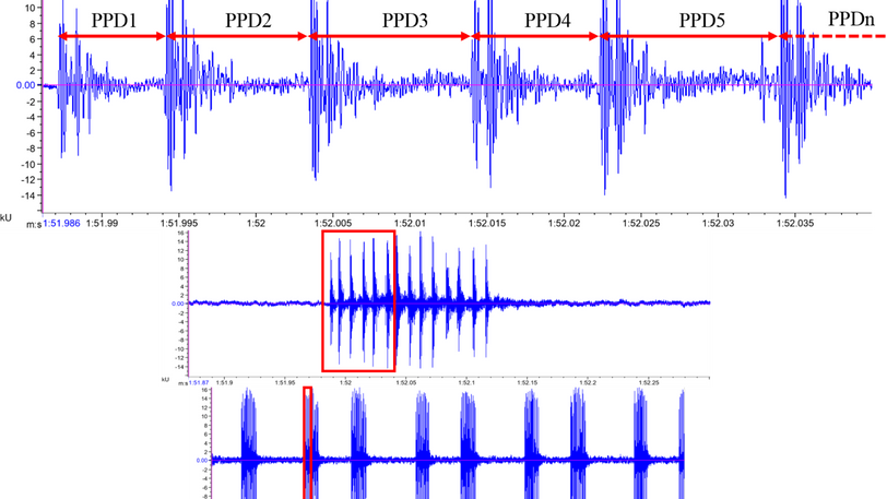 Expanded waveform views of a calling male corncrake. On the bottom, each syllable in the calls is repeated several times and appears as a column. On the top, the cursor increment is 0.005s to determine the number of pulses as well as the pulse to pulse duration (PPD) of each note
