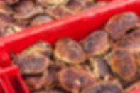 Fresh-Crab-.jpg
