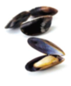 Mussels-Flat.jpg