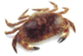 live_crab.jpg