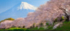 Japan-Cherry-Blossom-View.jpg
