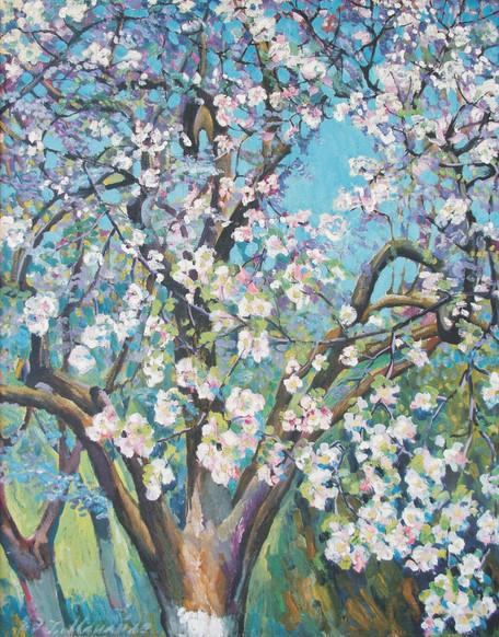 Цвітуча яблоня / Blooming apple tree