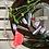 Thumbnail: Pure Anada Lipstick - Hibiscus