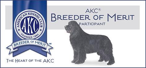 Newfoundland puppy breeders, NCA member,