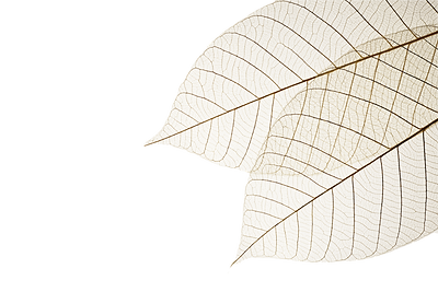 Two%20Dried%20Leaves_edited.png