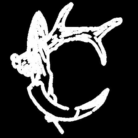 logo-acca-blanc.png