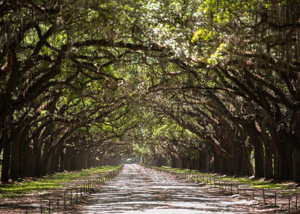 Oak Trees Road
