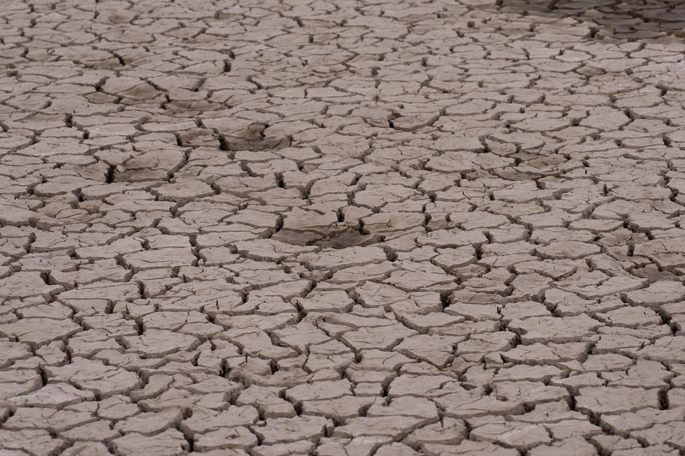 Dead Soil