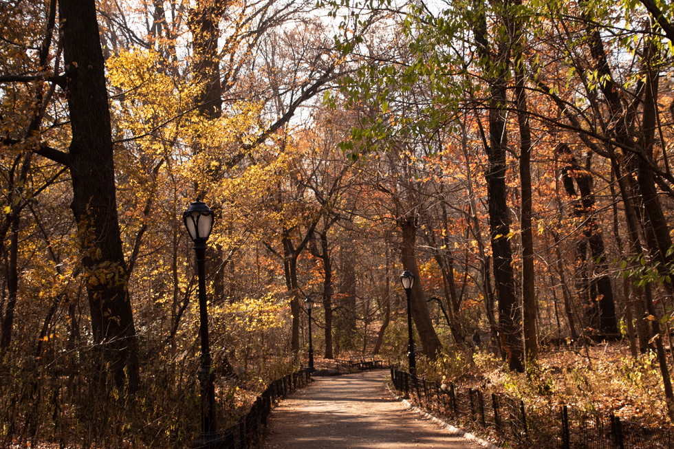 Trail at Central Park
