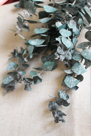 Magically Using Eucalyptus this fall!