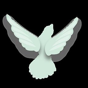 webiste-bird3-01_edited.png