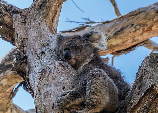 adorable-animal-animal-photography-21224