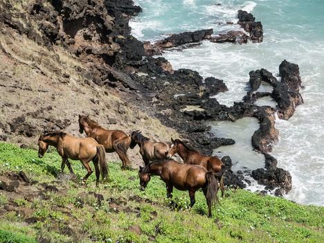 Shore leave: Horseriding Ua Huka
