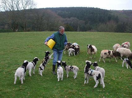 peter-and-lambs.jpg