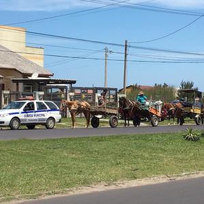 """Tramandaí/RS e os """"invisíveis"""" cavalos do asfalto"""