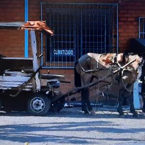 Ministério Público de Santa Cruz do Sul instaura inquérito sobre a lei das carroças