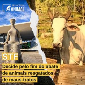 STF Decide pelo Fim do Abate de Animais Resgatados de Maus-tratos