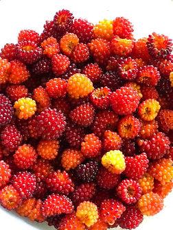 Chignik Berries.jpg