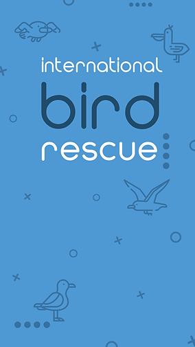 bird-rescuebackground.png