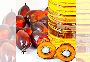 Vegetable Oil, Palm Olein in Caloocan