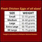 masagana_Chicken-Eggs.jpg