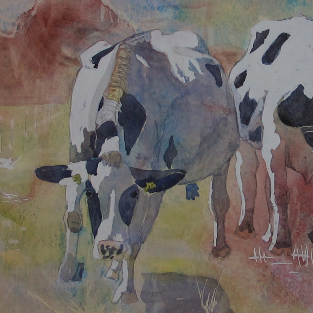 Cows on the Move, gerri young, watercolo