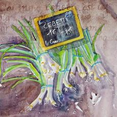 Cebette, watercolor, 300 dpi, Geraldine
