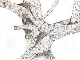 Birch Tree FINAL.jpg