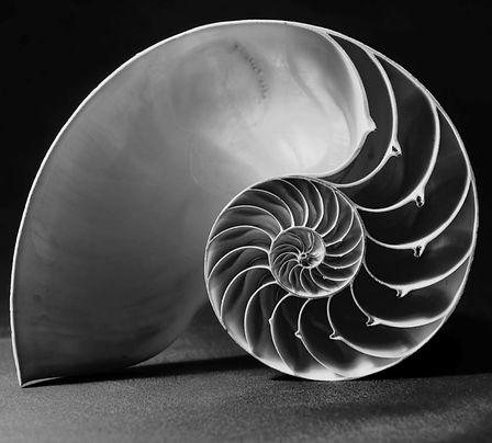 Nautilus-Shell-Fibonacci cropped.jpg