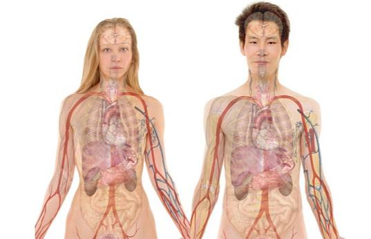 Mann Frau Anatomie