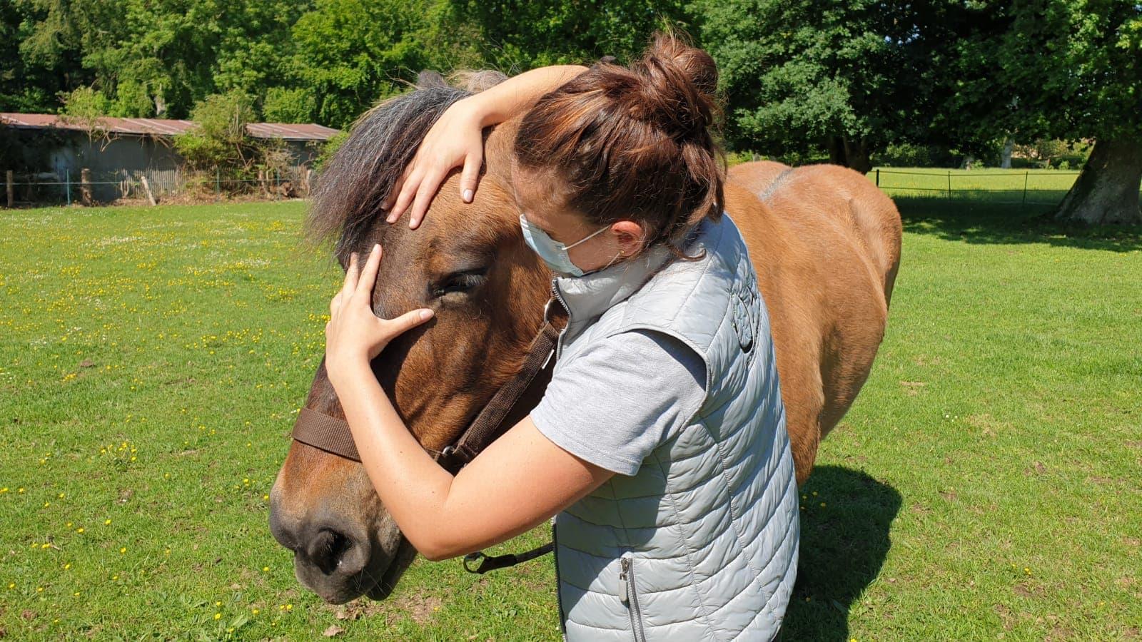 Consultation ostéopathie cheval de trait
