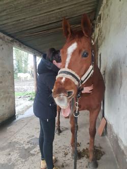 Consultation ostéopathie cheval