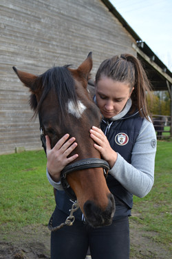 Ostéopathie crânienne cheval
