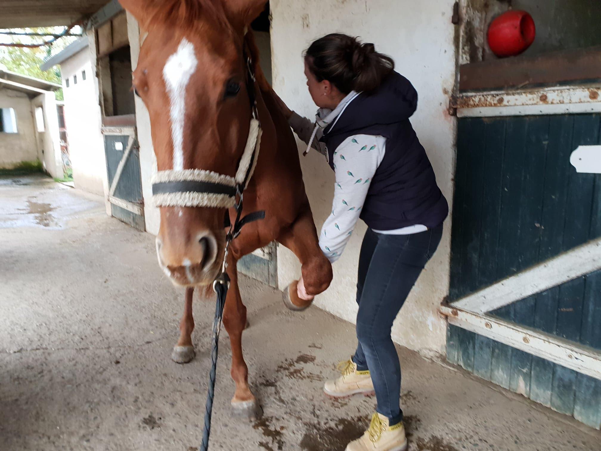 Manipulation de l'épaule Cheval