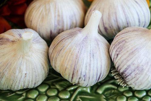 Rocambole Seed Garlic