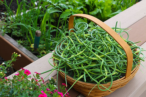Garlic Scapes (3 lbs)