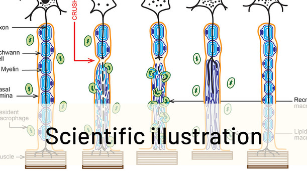 Click here to see my Scientific illustrations